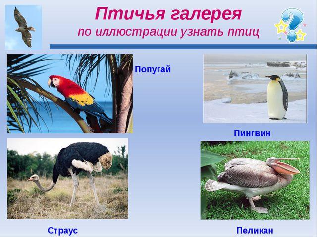 Птичья галерея по иллюстрации узнать птиц Попугай Пингвин Страус Пеликан