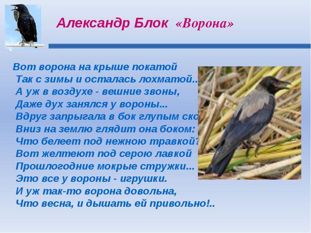 Вот ворона на крыше покатой Так с зимы и осталась лохматой... А уж в воздухе...