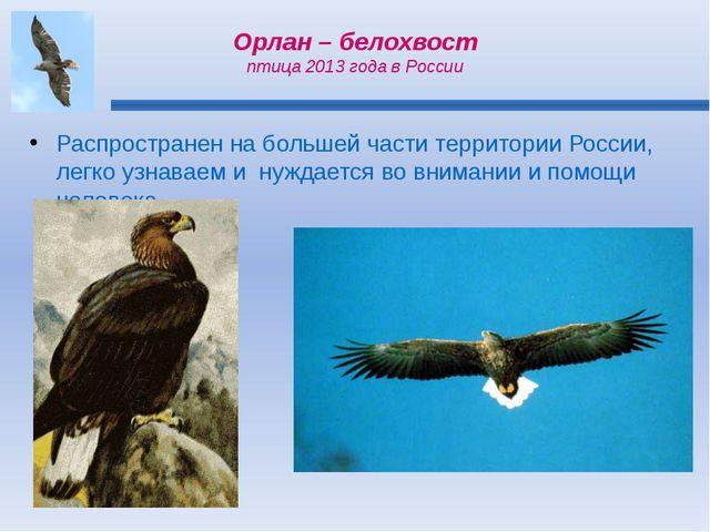 Орлан – белохвост птица 2013 года в России Распространен на большей части тер...