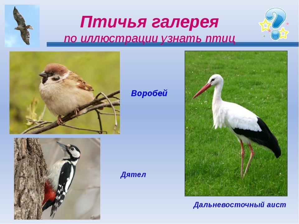 Птичья галерея по иллюстрации узнать птиц Воробей Дятел Дальневосточный аист