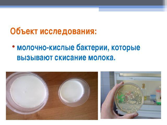 Объект исследования: молочно-кислые бактерии, которые вызывают скисание молока.