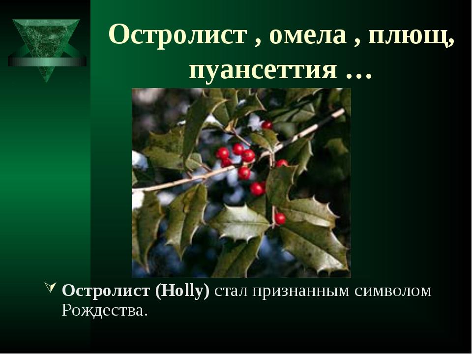 Остролист , омела , плющ, пуансеттия … Остролист (Holly) стал признанным симв...