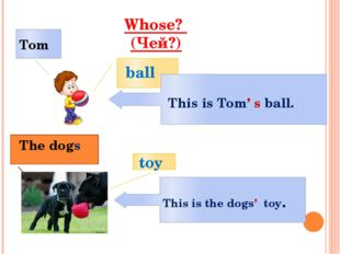 Whose? (Чей?) ball Tom This is Tom' s ball. toy The dogs This is the dogs' t