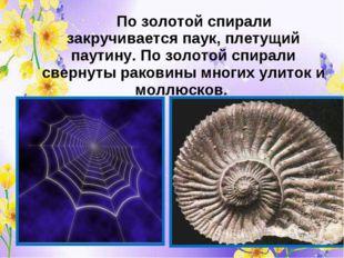 По золотой спирали закручивается паук, плетущий паутину. По золотой спирали
