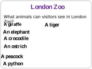 London Zoo A giraffe An elephant A tiger A crocodile A python An ostrich A pe