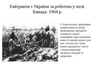 Емігранти з України за роботою у полі. Канада. 1904 р. У подальшому, одержавш