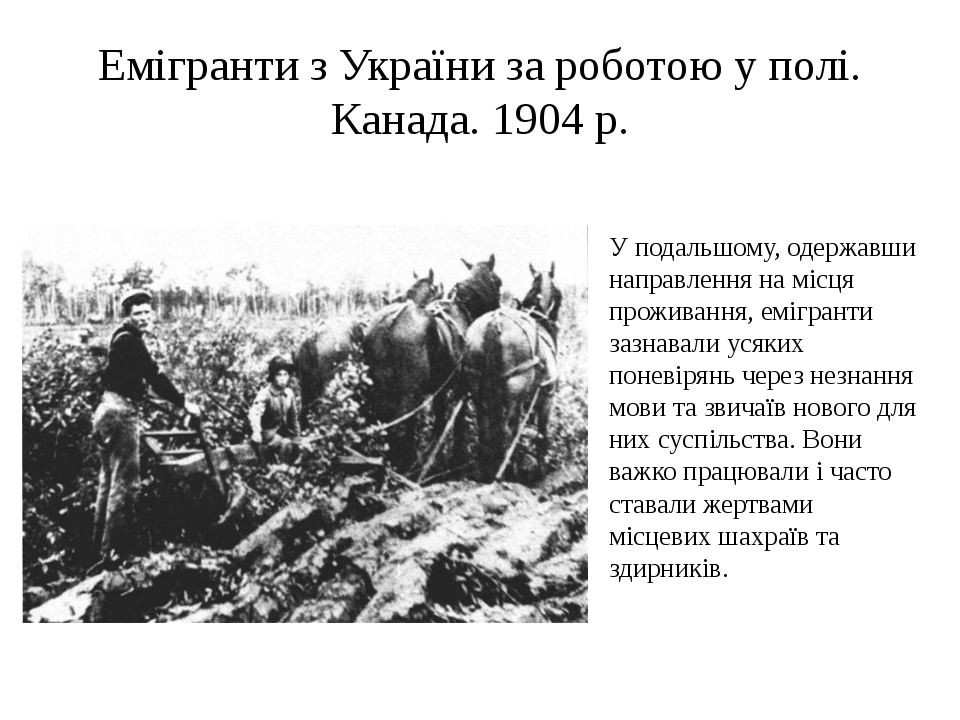 Емігранти з України за роботою у полі. Канада. 1904 р. У подальшому, одержавш...