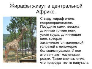 Жирафы живут в центральной Африке. С виду жираф очень непропорционален. Посуд