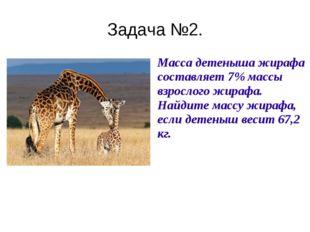Задача №2. Масса детеныша жирафа составляет 7% массы взрослого жирафа. Найди