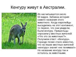 Кенгуру живут в Австралии. Их насчитывается около 50 видов. Забавна история с