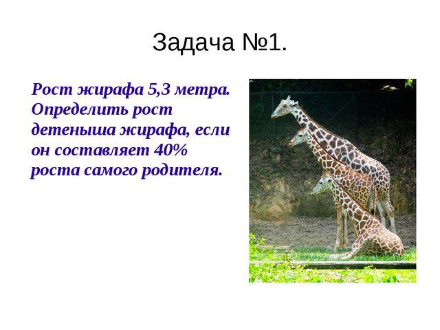 Задача №1. Рост жирафа 5,3 метра. Определить рост детеныша жирафа, если он с...