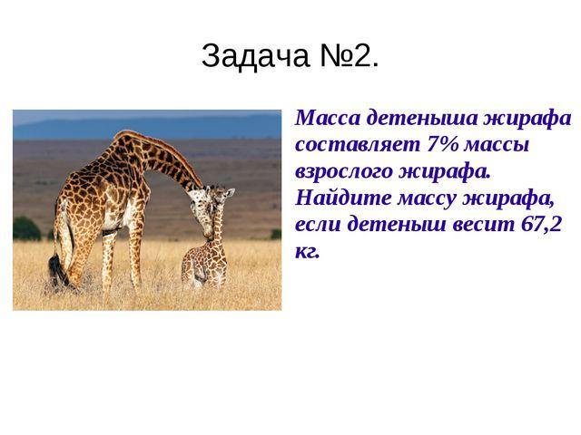 Задача №2. Масса детеныша жирафа составляет 7% массы взрослого жирафа. Найди...