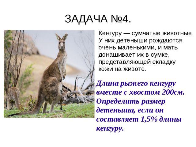 ЗАДАЧА №4. Кенгуру — сумчатые животные. У них детеныши рождаются очень малень...