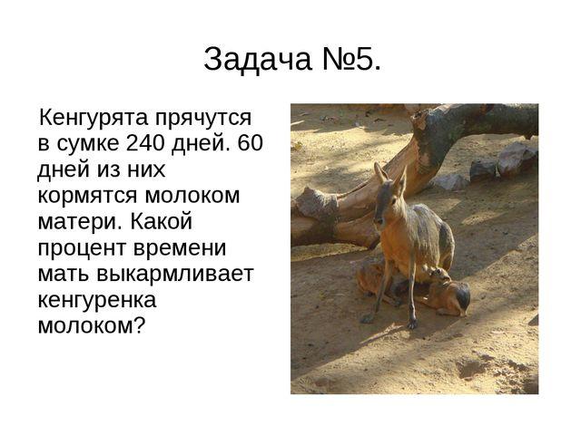 Задача №5. Кенгурята прячутся в сумке 240 дней. 60 дней из них кормятся молок...