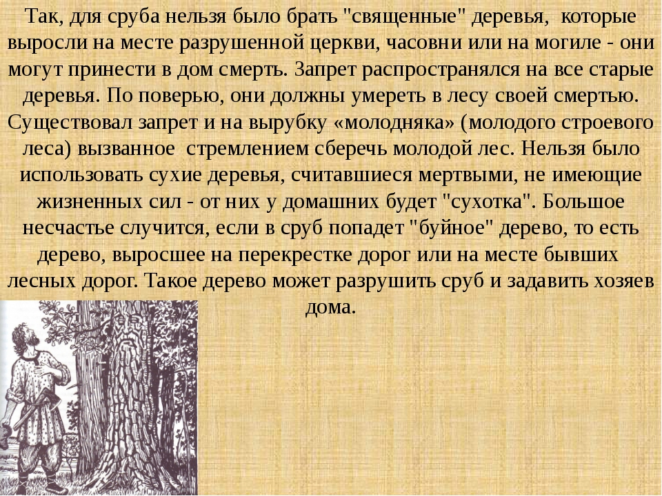 """Так, для сруба нельзя было брать """"священные"""" деревья, которые выросли на мест..."""