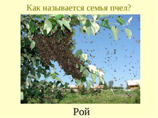 Как называется семья пчел? Рой