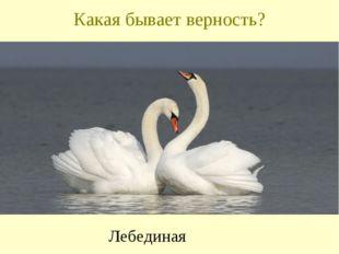 Какая бывает верность? Лебединая