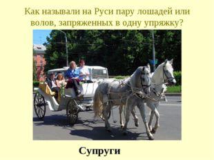 Как называли на Руси пару лошадей или волов, запряженных в одну упряжку? Супр
