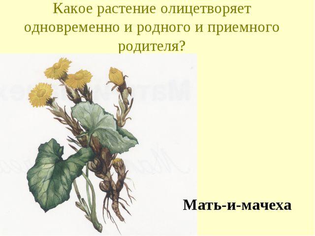 Какое растение олицетворяет одновременно и родного и приемного родителя? Мать...