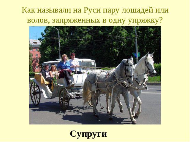 Как называли на Руси пару лошадей или волов, запряженных в одну упряжку? Супр...