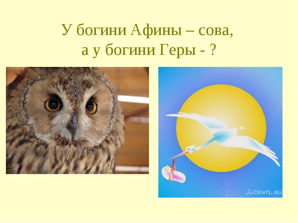 У богини Афины – сова, а у богини Геры - ?