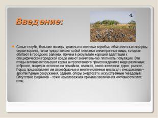 Введение: Сизые голуби, большие синицы, домовые и полевые воробьи, обыкновен