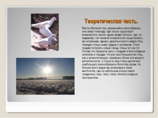 Теоретическая часть. Места обитания птиц чрезвычайно разнообразны: они живут