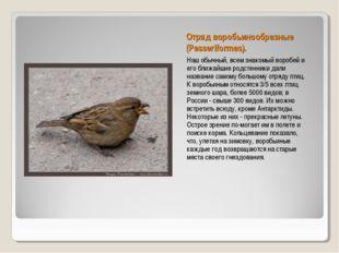 Отряд воробьинообразные (Passeriformes). Наш обычный, всем знакомый воробей и