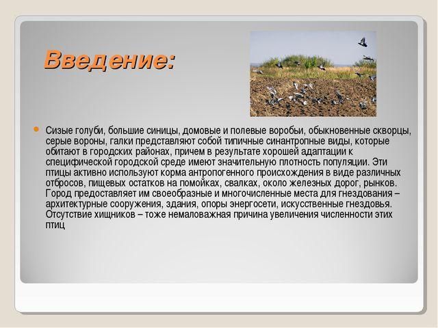 Введение: Сизые голуби, большие синицы, домовые и полевые воробьи, обыкновен...
