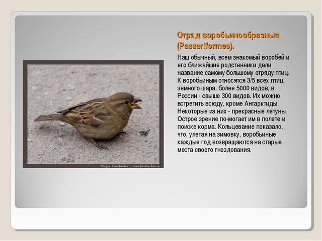 Отряд воробьинообразные (Passeriformes). Наш обычный, всем знакомый воробей и...