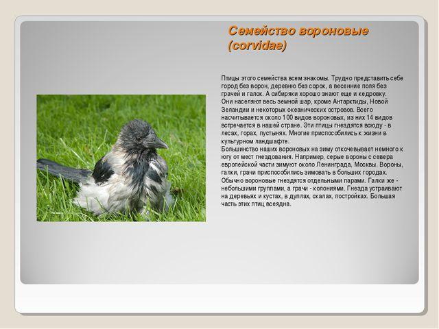 Семейство вороновые (corvidae) Птицы этого семейства всем знакомы. Трудно пре...