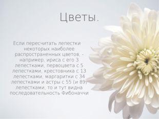 Цветы. Если пересчитать лепестки некоторых наиболее распространенных цветов,
