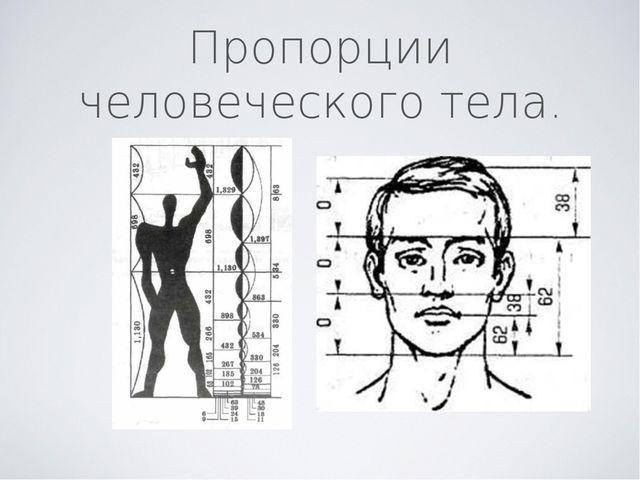 Пропорции человеческого тела.
