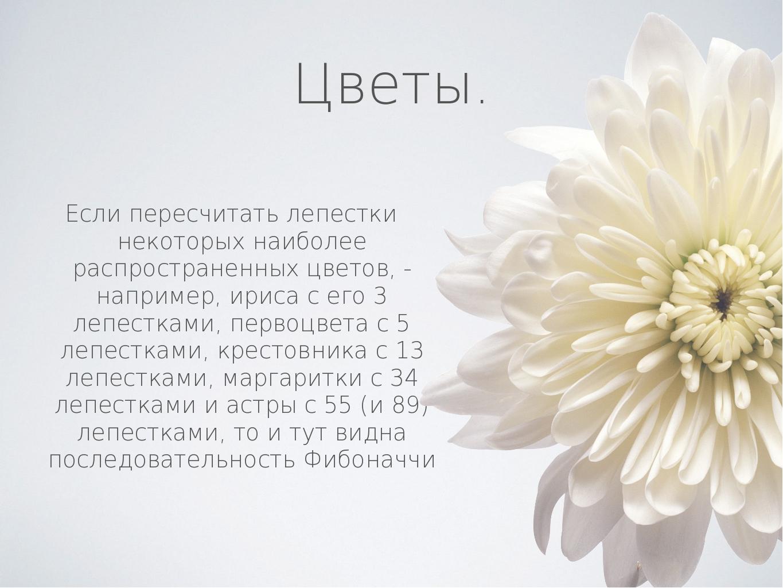 Цветы. Если пересчитать лепестки некоторых наиболее распространенных цветов,...