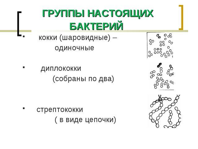 ГРУППЫ НАСТОЯЩИХ БАКТЕРИЙ кокки (шаровидные) – одиночные диплококки (собраны...