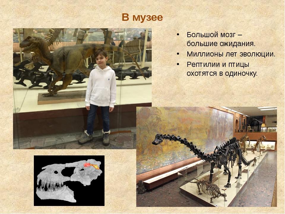 В музее Большой мозг – большие ожидания. Миллионы лет эволюции. Рептилии и пт...