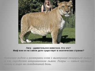 Лигр - удивительное животное. Кто это? Миф или он на самом деле существует в