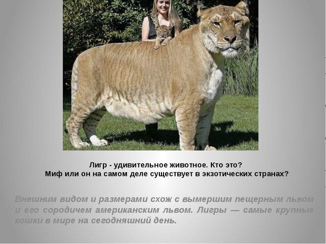 Лигр - удивительное животное. Кто это? Миф или он на самом деле существует в...