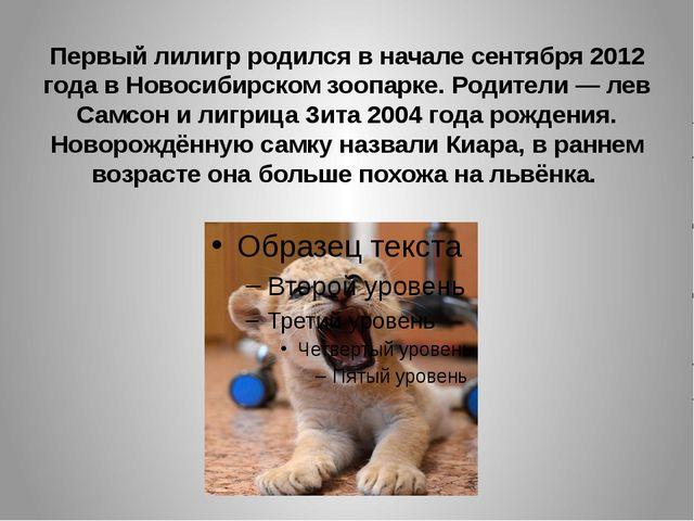 Первый лилигр родился в начале сентября 2012 года в Новосибирском зоопарке. Р...