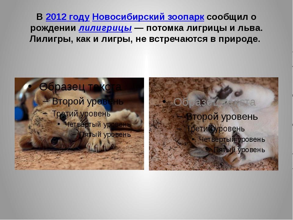 В2012 годуНовосибирский зоопарксообщил о рождениилилигрицы— потомка лигр...