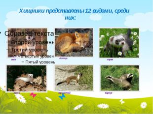 Хищники представлены 12 видами, среди них: волк лисица хорек ласка горностай