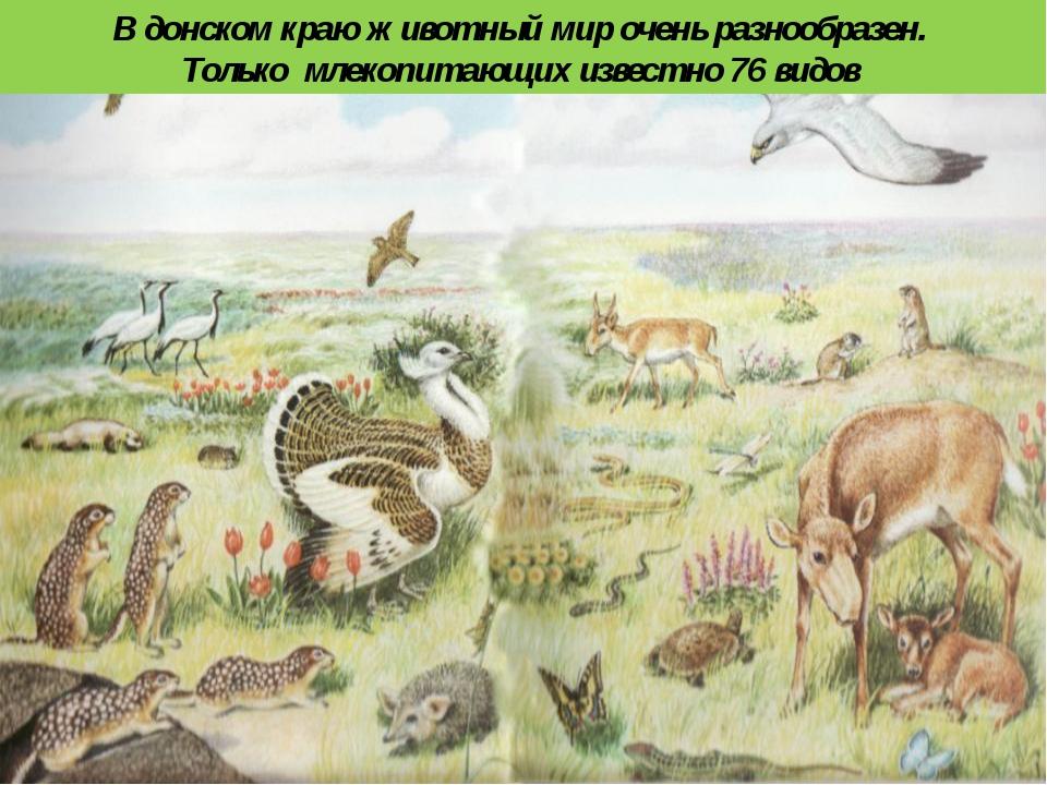 В донском краю животный мир очень разнообразен. Только млекопитающих известно...