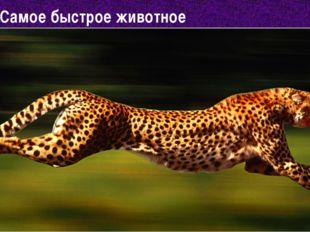 Самое быстрое животное 1