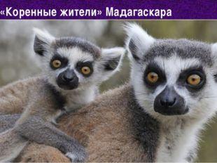 «Коренные жители» Мадагаскара 16