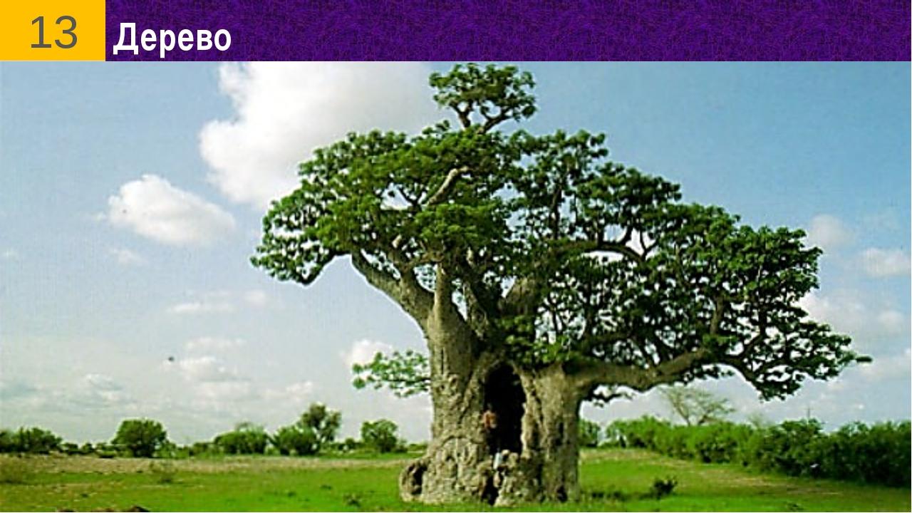 Дерево 13