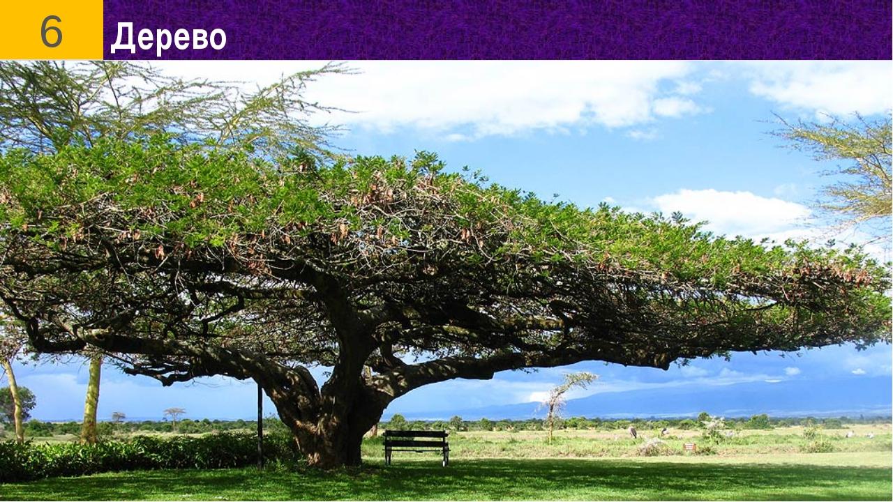 Дерево 6