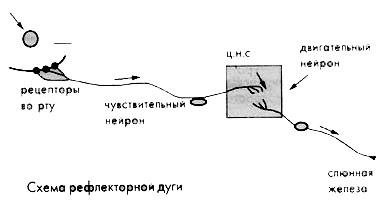 http://festival.1september.ru/articles/212006/img4.jpg
