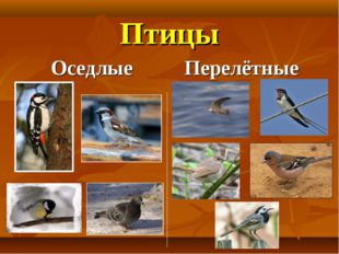 Птицы Оседлые Перелётные