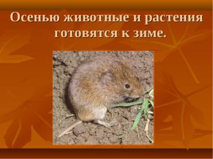 Осенью животные и растения готовятся к зиме.