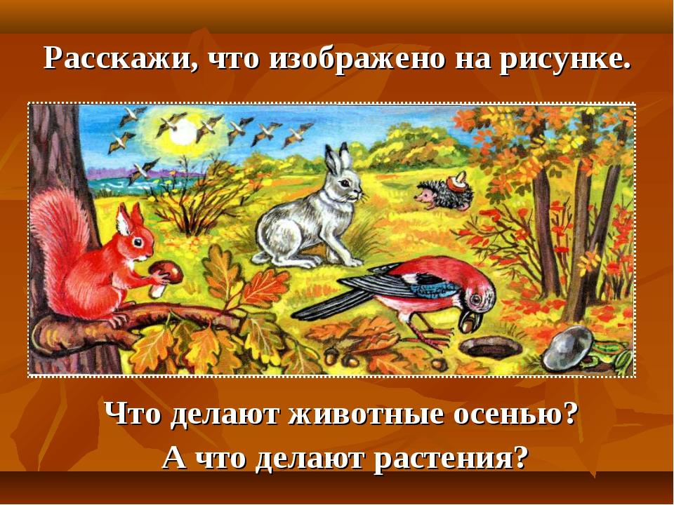 Расскажи, что изображено на рисунке. Что делают животные осенью? А что делают...